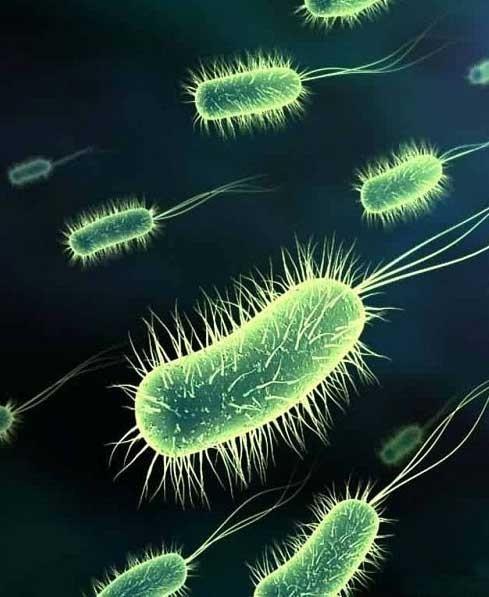 Питьевая вода проверяется на содержание бактерий